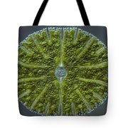 Micrasterias Sp. Algae Lm Tote Bag