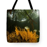 Orange Sponges Grow Tote Bag