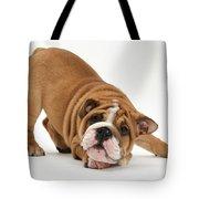 Playful Bulldog Pup Tote Bag