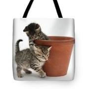 Playful Kittens Tote Bag