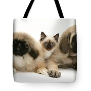Puppies And Kitten Tote Bag by Jane Burton