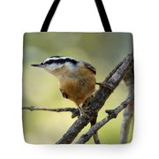 Rose Breasted Nuthatch Tote Bag