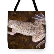 Sabana Surinam Toad Tote Bag