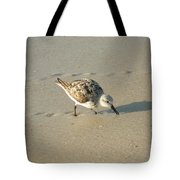 Sandpiper Hunting On Assateague Island Maryland Tote Bag