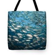 Schooling Bigeye Jacks Tote Bag