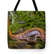 Seepage Salamander Tote Bag