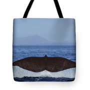 Sperm Whale Tail New Zealand Tote Bag