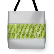 Spirogyra Sp. Algae Lm Tote Bag