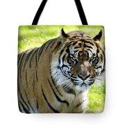 Sumatran Tiger  Tote Bag