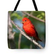 Summer Tanager Tote Bag