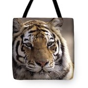 Tiger, Qinhuangdao Zoo, Hebei Province Tote Bag