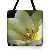 Tulip Named Perles De Printemp Tote Bag