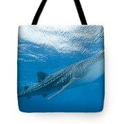 Whale Shark, Ari And Male Atoll Tote Bag