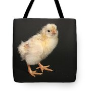 White Leghorn Chick Tote Bag