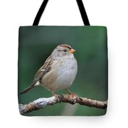 Whitecrowned Sparrow Tote Bag