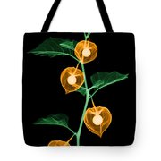 X-ray Of Chinese Lantern Plant Tote Bag
