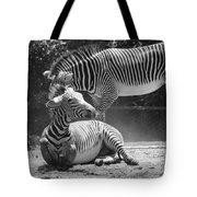 Zebras In Black And White Tote Bag