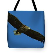 An Endangered White-tailed Sea Eagle Tote Bag