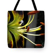 Asiatic Lily Named Black-eyed Cindy Tote Bag