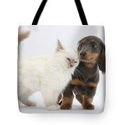 Blue-point Kitten & Dachshund Tote Bag