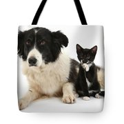 Border Collie And Tuxedo Kitten Tote Bag