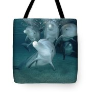 Bottlenose Dolphin Underwater Pair Tote Bag