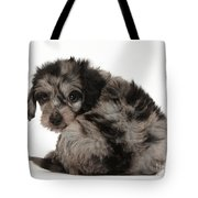 Doxie-doodle Puppy Tote Bag