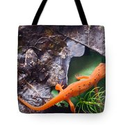 Easterm Newt Nnotophthalmus Viridescens 2 Tote Bag