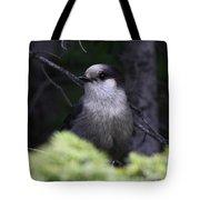 Gray Jay Tote Bag