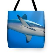Gray Reef Shark With Remora, Papua New Tote Bag