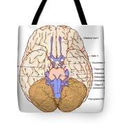Illustration Of Cranial Nerves Tote Bag