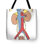 Illustration Of Female Urinary System Tote Bag