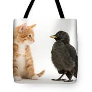 Jackdaw And Kitten Tote Bag