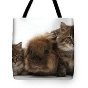 Kittens And Rabbit Tote Bag