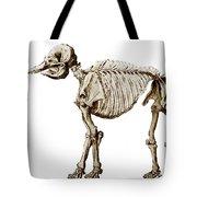 Mastodon Skeleton Tote Bag by Science Source