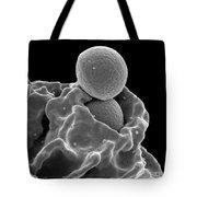 Neutrophil Ingesting Mrsa Bacteria, Sem Tote Bag