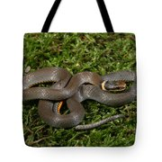 Northern Ringneck Snake Tote Bag