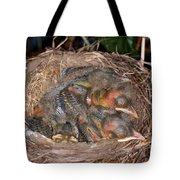 Robin Nestlings Tote Bag