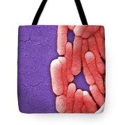 Salmonella, Sem Tote Bag