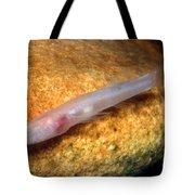 Southern Cave Fish Tote Bag