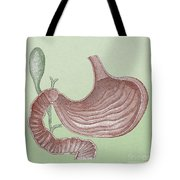 Stomach And Bile Duct Tote Bag