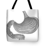 Stomach Tote Bag