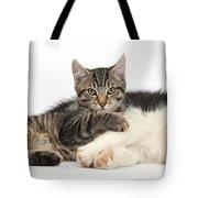 Tabby Kitten & Border Collie Tote Bag