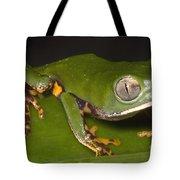 Tiger Stripe Monkey Frog Tote Bag