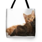 Toy Poodle Puppy With Kitten Tote Bag