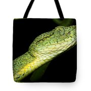 Two Striped Forest Pit Viper Tote Bag