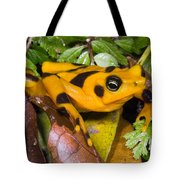 Harlequin Toad Tote Bag