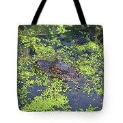 31- Alligator Hatchling Tote Bag