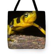 Harlequin Toad Tote Bag