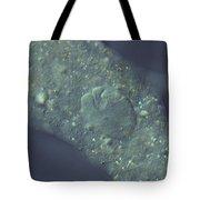Amoeba Proteus Lm Tote Bag